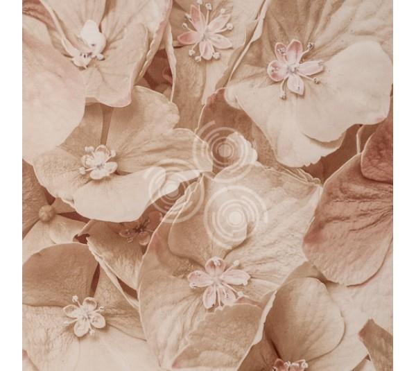 обои Artdecorium Augusta 420801